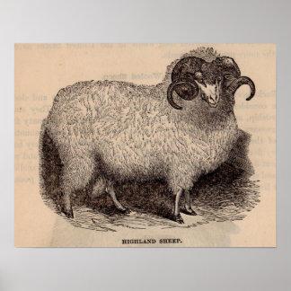 Moutons du 19ème siècle de montagne d'impression poster