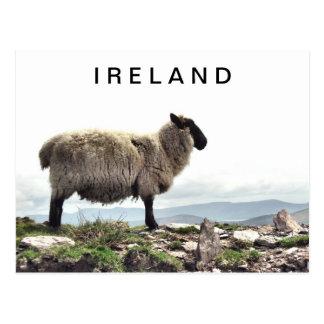 Moutons irlandais sur la carte postale de roches