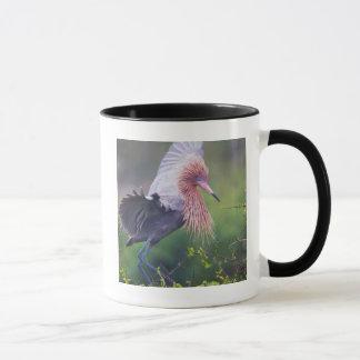 Mug Adulte rougeâtre de héron (Egretta Rufescens)
