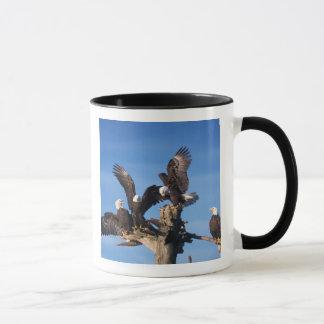 Mug aigles chauves, leuccocephalus de Haliaeetus,