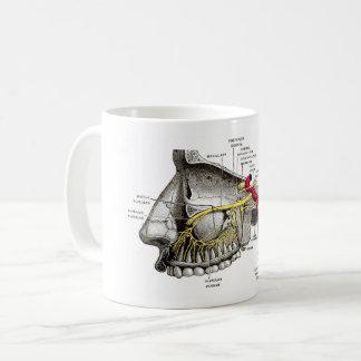 Mug Anatomie maxillaire d'humain de nerfs