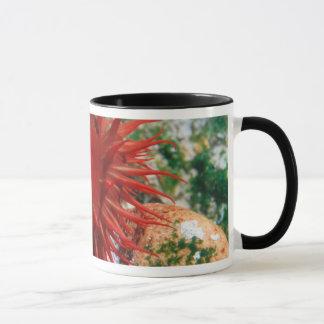 Mug Anémone de la Mer Rouge dans la piscine