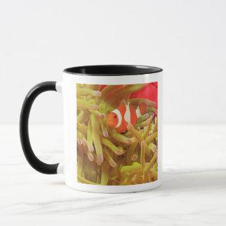 Mug anemonefish sur l'actinie Pacifique d'indo géant,