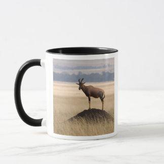 Mug Antilope de Tsessebe sur la surveillance pour des