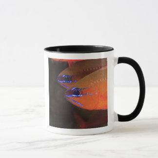 Mug Apogon Anneau-coupé la queue de Cardinalfish)