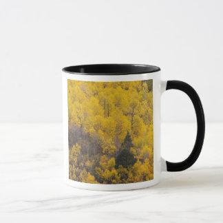 Mug Arbres 12 de rivière et de tremble de Provo