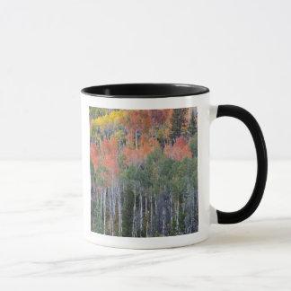 Mug Arbres 16 de rivière et de tremble de Provo