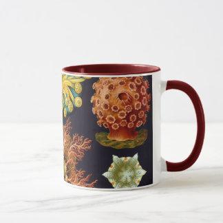 Mug Ascidiae par Ernst Haeckel, animaux marins