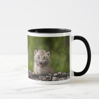 Mug Bébé Lynx regardant au-dessus de l'arbre tombé par