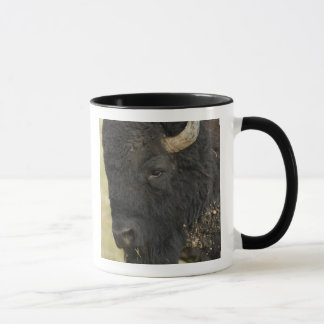 "Mug Bison de bison de ""Buffalo"" de bison américain),"