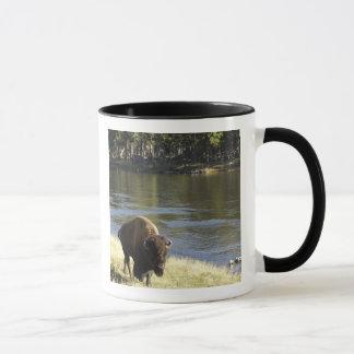Mug Bison de Taureau marchant le long de la rivière,