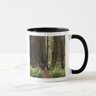 Mug CA, parc d'état de séquoias de Jedediah Smith,