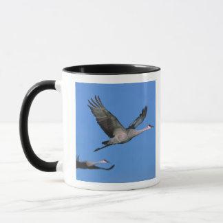 Mug Canadensis de Grus de grue de Sandhill) en vol.