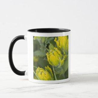 Mug Castilleja d'or indien de pinceau