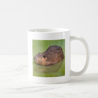 Mug Castor nord-américain dans l'eau