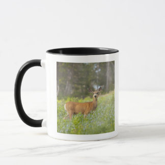 Mug Cerfs communs de mule (hemionus d'Odocoileus) dans