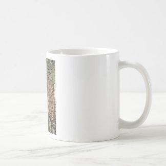 Mug Champ nu de vignoble en hiver. La Toscane, Italie