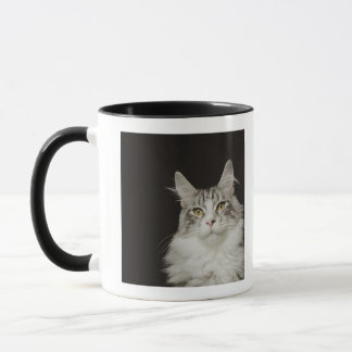 Mug Chat de ragondin adulte du Maine