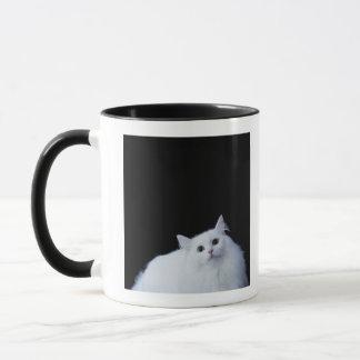 Mug Chat sibérien