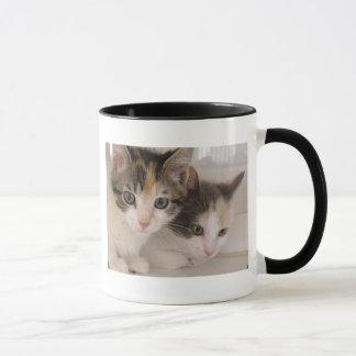 Mug Chatons de calicot