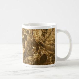 Mug Chaux miocène sous le microscope