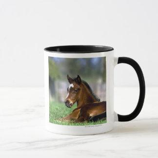 Mug Cheval de pur sang, Irlande