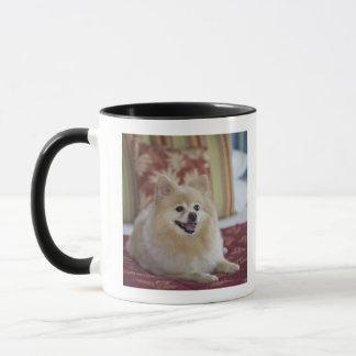 Mug Chien de Pomeranian dans la chambre d'hôtel