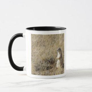 Mug Chien de prairie à queue noire