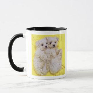Mug Chien maltais ; est une petite race du chien blanc