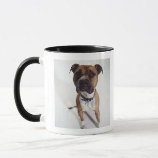 Mug Chien, se reposer du Staffordshire Terrier