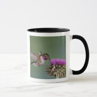 Mug colibri Large-coupé la queue, Selasphorus 2