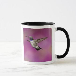 Mug Colibri Noir-chinned, Archilochus