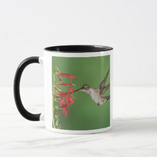 Mug Colibri Noir-chinned, Archilochus 2