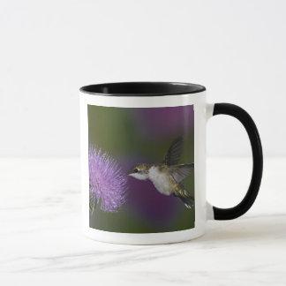 Mug colibri Rubis-throated en vol au chardon