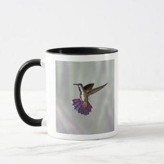 Mug Colibri Vert-breasted Anthracocorax 3 de mangue