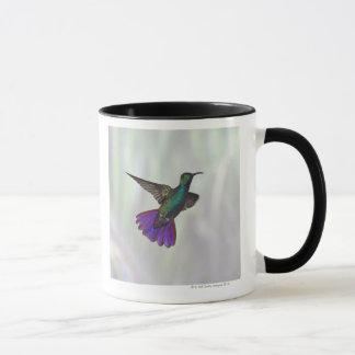 Mug Colibri Vert-breasted Anthracocorax de mangue