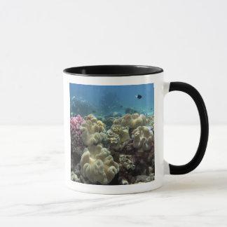 Mug Corail, récif d'Agincourt, la Grande barrière de