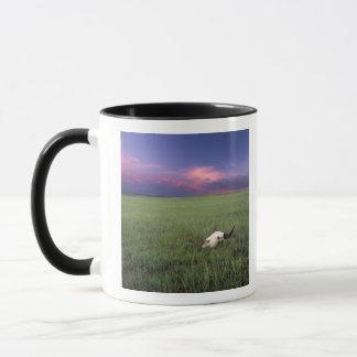 Mug Crâne de Buffalo dans l'herbe de prairie près de