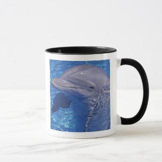 Mug Dauphin de Bottlenosed, Tursiops Truncatus