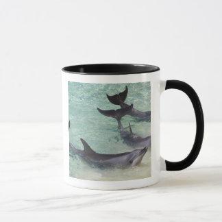 Mug Dauphins, monde de mer, la Gold Coast, Queensland,