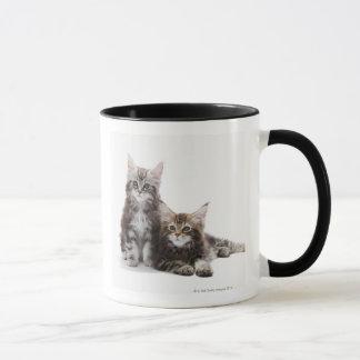 Mug Deux chatons de chat de ragondin du Maine