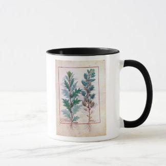 Mug Deux variétés d'Artemesia