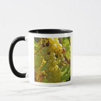 Mug Du Chasselas dans le vignoble - planté longtemps