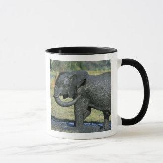 Mug Éléphant africain, (africana de Loxodonta), boue