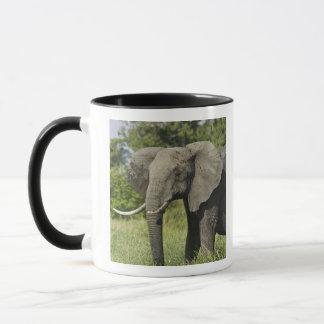 Mug Éléphant africain, masai Mara, Kenya. Loxodonta