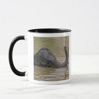 Mug Éléphant asiatique se baignant, éléphant