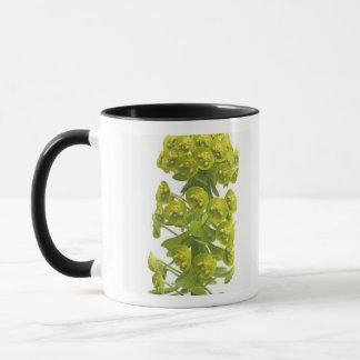 Mug Euphorbe