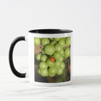 Mug Fermez-vous de l'insecte de dame sur les raisins