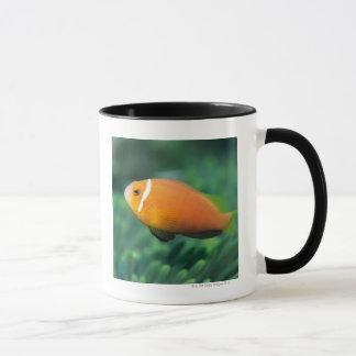 Mug Fermez-vous des poissons d'anémone des Maldives,