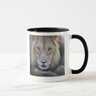 Mug fermez-vous d'un lion masculin, Panthera Lion,